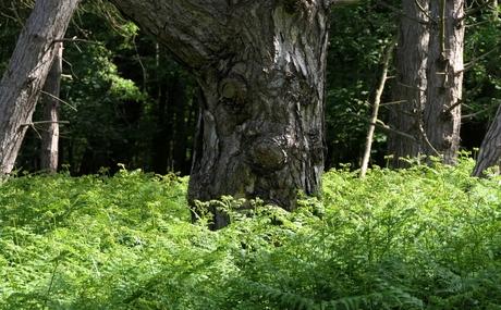 Bomengezicht