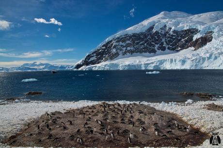 Antarctica - Dorian Bay
