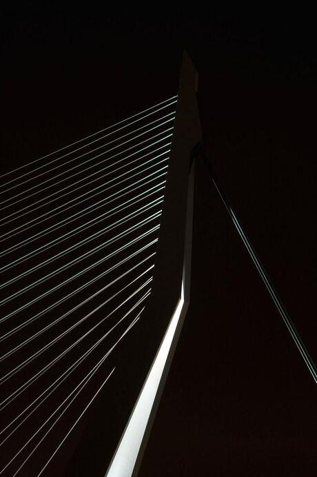 Lines of Rotterdam