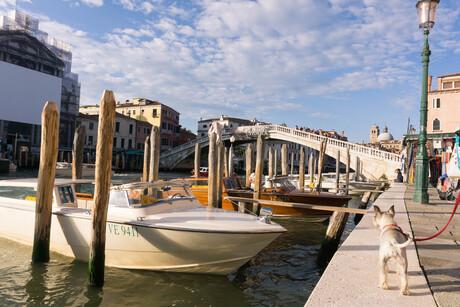 Venetië met hond