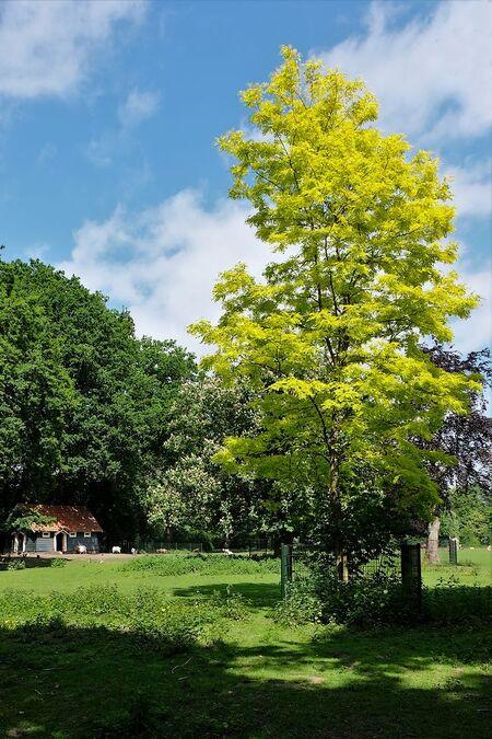 Tinten groen.... - Allen bedankt voor de reactie,s en kan weer computeren..  gr jenny.. - foto door jenny42 op 20-06-2019 - deze foto bevat: lucht, wolken, zon, lente, natuur, park, licht, landschap, bomen, huisje, meppel, wilhelmina.