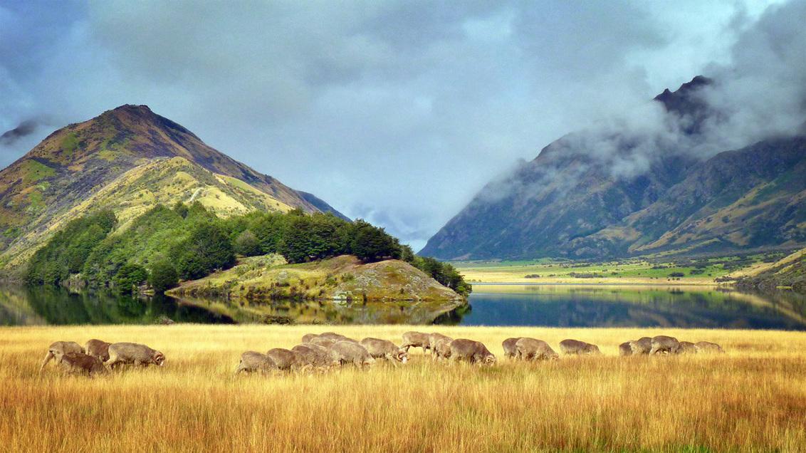 Moke Lake II - Al liftend reisde ik Nieuw-Zeeland door, met in mijn backpack niet veel meer dan een voorraadje ingeblikt voedsel, wat kleding en een zeer lichtgewic - foto door BartBrouwer91 op 12-09-2016 - deze foto bevat: gras, reizen, schapen, bergen, meer, nieuw zeeland, moke lake