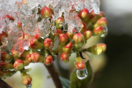 druppel smeltend ijs