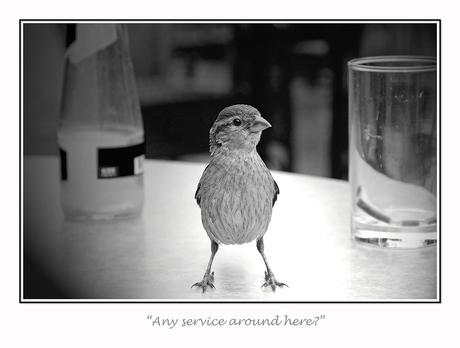 Any service around here?