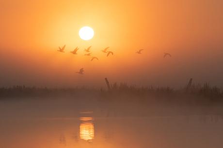 Misty birdscape 2