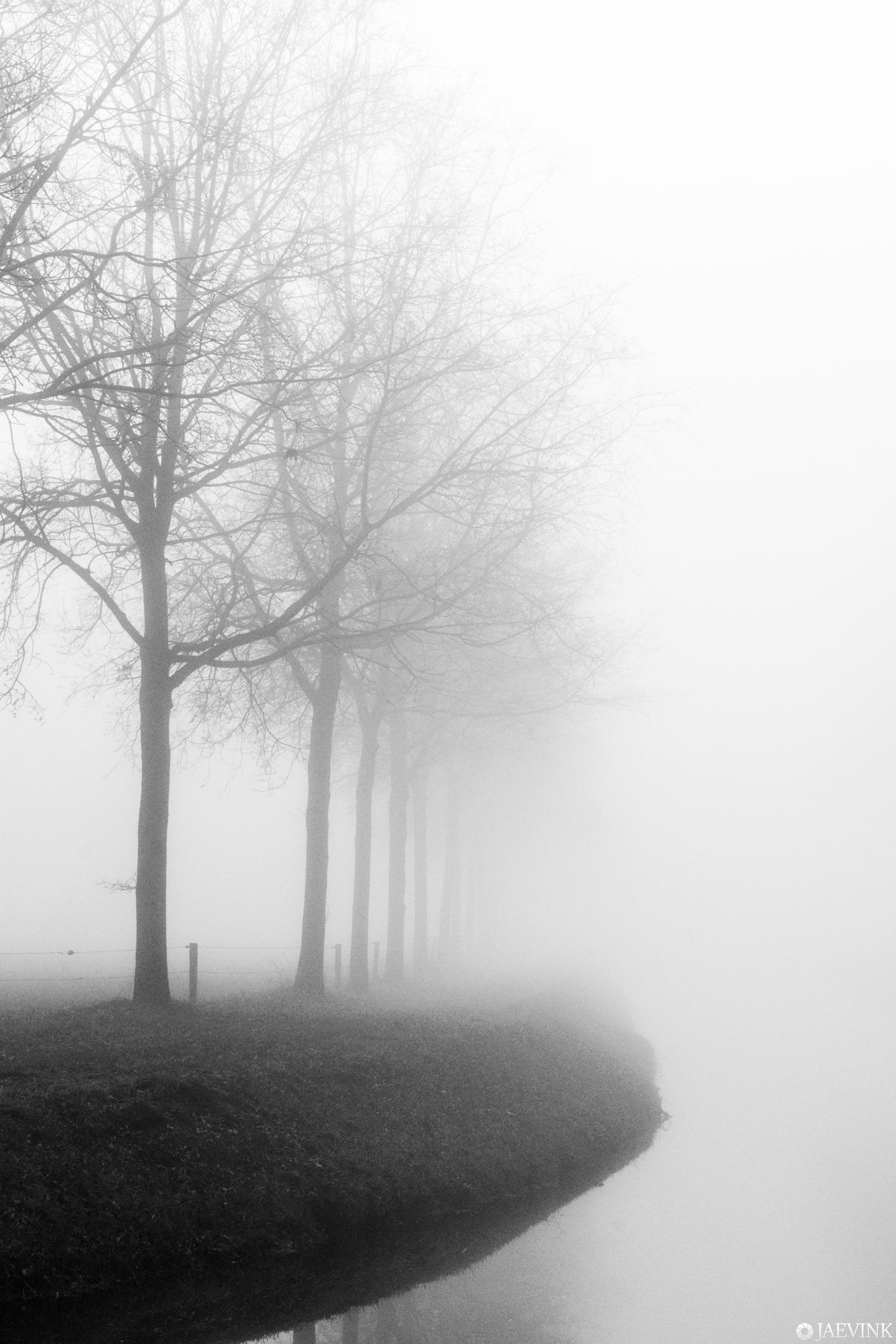 Black, white and fog - Black, white and fog - foto door vwinke op 15-04-2021 - deze foto bevat: natuur, mist, fog, zwartwit, black and white, reflection, bomen, water, atmosfeer, fabriek, mist, lucht, boom, natuurlijk landschap, afdeling, hout, grijs, atmosferisch fenomeen