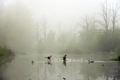 Mist bij het oude moeras