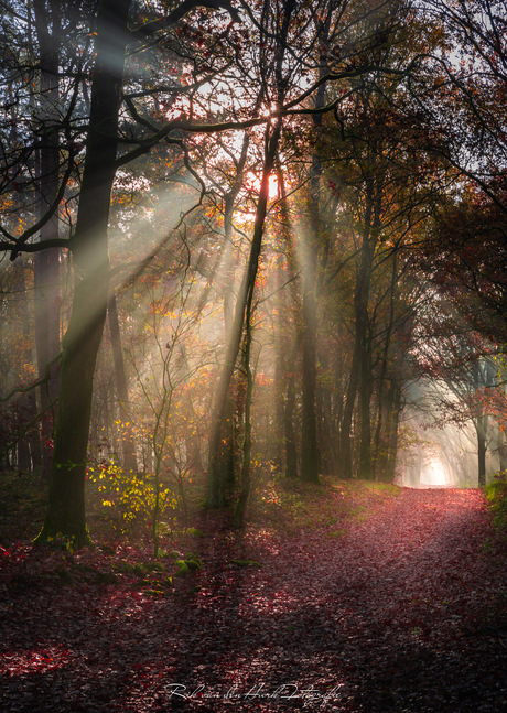 Angel pathway