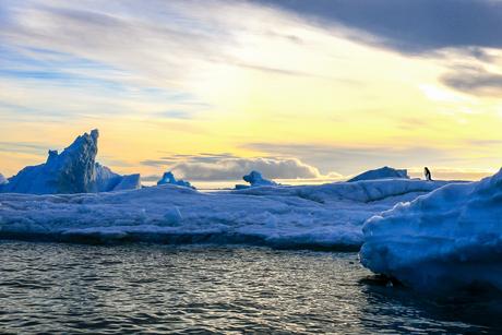 De eenzame pinguïn op Antarctica