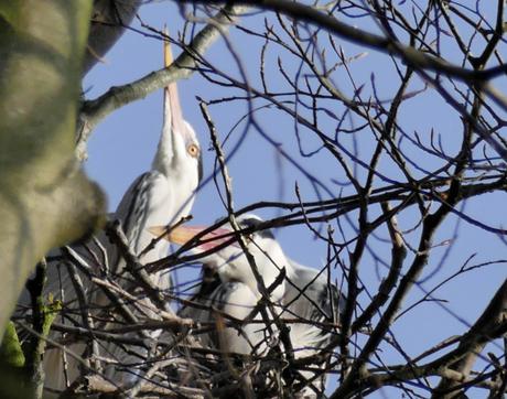 P1180979_001samen op het nest