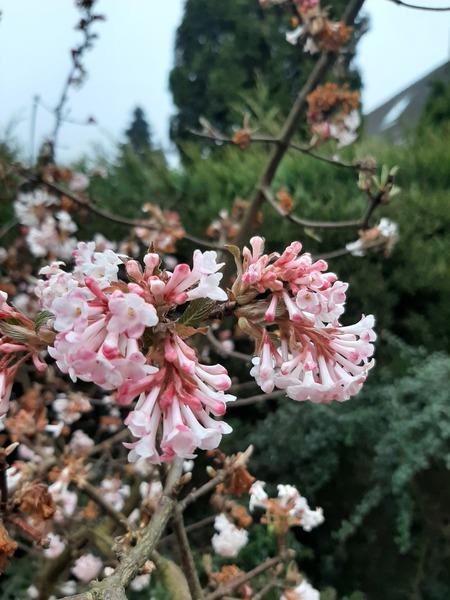 Bloesem - De lente is in aantocht. - foto door speed-560 op 05-03-2021 - deze foto bevat: bloem