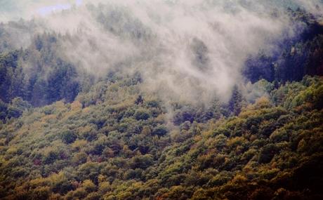 Veel mist over de heuvels