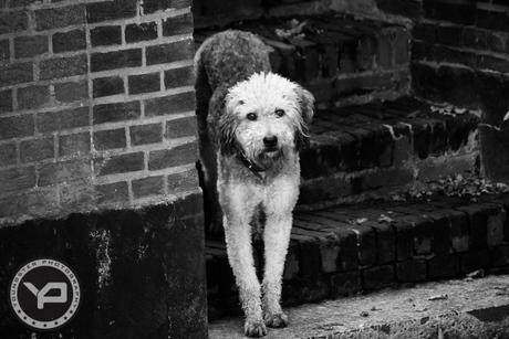 Parmantige hond