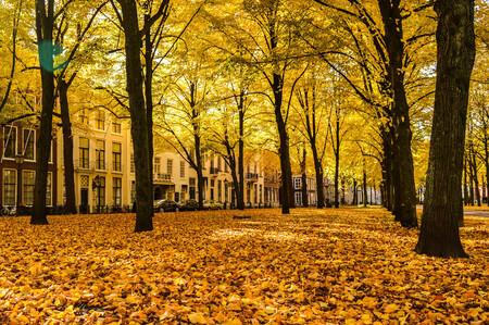 Herfst - Het Lange Voorhout in Den Haag is omringd door mooie oude panden, en ziet er elk seizoen compleet anders uit door de vele bomen en krokussen in de le - foto door daphnekeegstra op 24-02-2017 - deze foto bevat: geel, herfst, bomen, Den Haag, lange voorhout