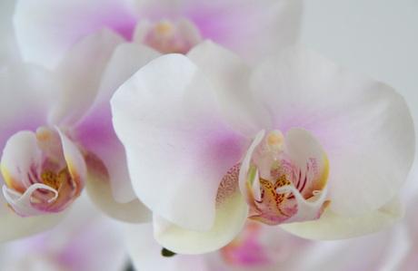 Een groepje orchideeen!
