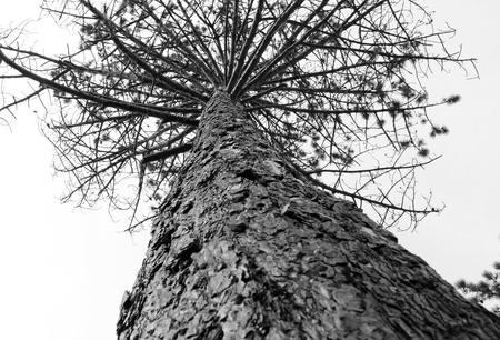 Kijk omhoog! - Met Welmanstudio in de Schoorlse duinen. Opdracht: zwart wit. Roet rout. - foto door yvonnevandermeer op 28-03-2013 - deze foto bevat: duinen, schoorl, zwart wit, roet route
