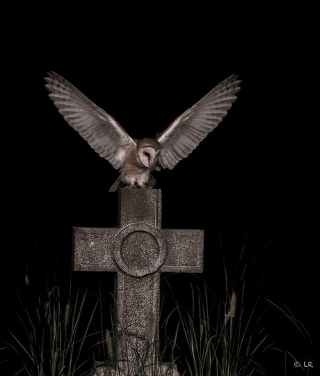 Mysterious owl