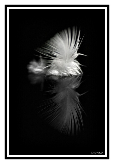 Feather light reflection