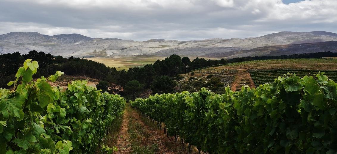 001 - Creation Wines, Heaven & Earth Valley, Zuid-Afrika - Verrukkelijke Creation Wines in de Hemel en Aarde Vallei, Zuid-Afrika - foto door AstridVeerkamp op 07-12-2016 - deze foto bevat: panorama, landschap, bergen, zuid-afrika, wijnvelden