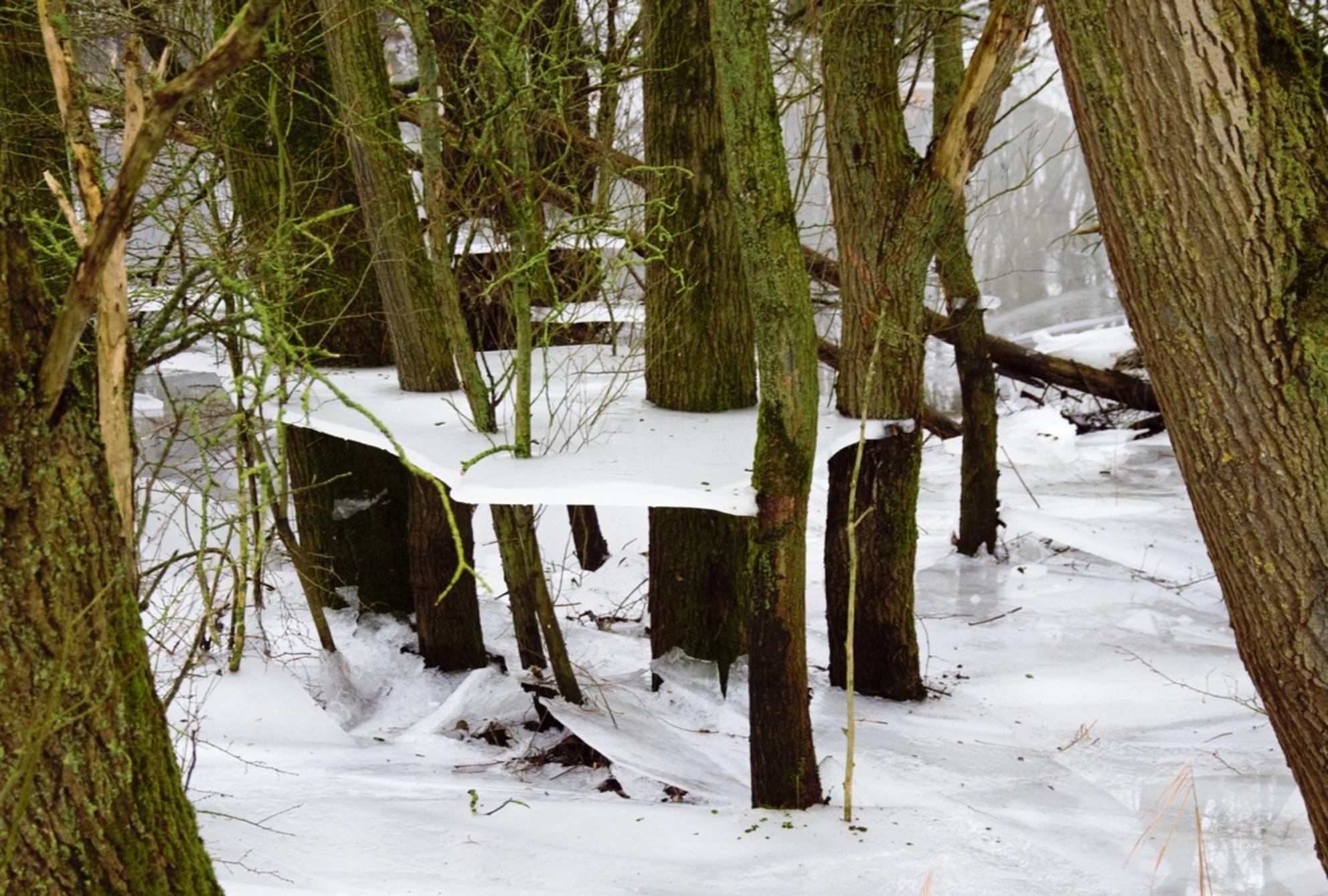 IJS - - - foto door huubwest op 17-02-2021 - deze foto bevat: water, dijk, natuur, ijs, landschap, bos, bomen, rivier - Deze foto mag gebruikt worden in een Zoom.nl publicatie