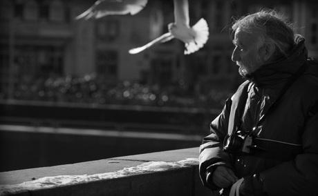 the Maestricht seagull whisperer