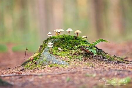 kabouter dorp - Oude stronk met paddenstoelen, maar het lijkt net de oprijlaan van een kabouter dorpje - foto door madcorona op 04-12-2020
