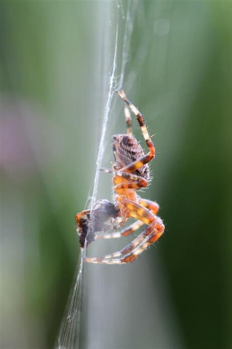 Nog een spin-voorbeeld