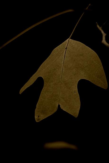 herfstblad..