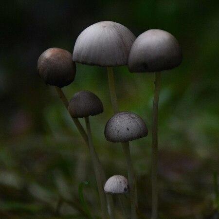 Fragile - zo teer, zo breekbaar. Een grassprietje verwijderen kan fataal zijn. Het lage perspectief bezorgt me brandnetelbeten en moddermeur. Gelukkig geen sch - foto door Harry Sibum op 18-10-2020 - deze foto bevat: herfst, paddenstoelen, sfeer, herfstbos, breekbaar, harry sibum, gedempt licht