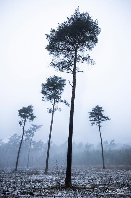 Een lijnenspel van bomen