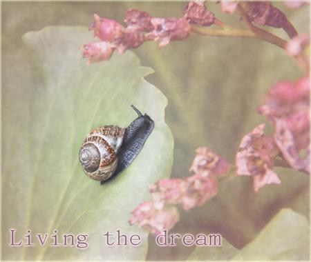 Dream - .. - foto door hillegonda op 19-05-2012 - deze foto bevat: roze, slak, bewerkt