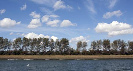 Hollandse kust