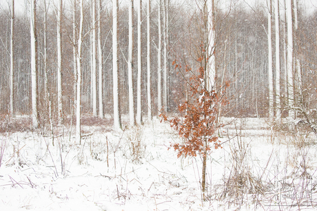 Sneeuw in Dordtse Biesbosch