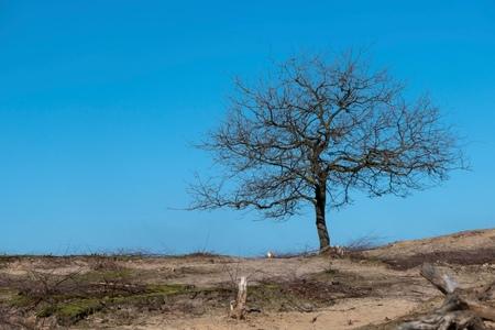 Blue sky - Afgelopen maandag gewandeld in Dorst. Dat enkele boompje met de blauwe lucht kon ik niet laten op de foto te zetten. Toch handig zo'n zakcamera. Nog  - foto door PetraD1966 op 06-03-2021 - deze foto bevat: landschap