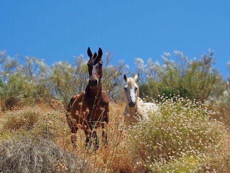 Paarden in de natuur