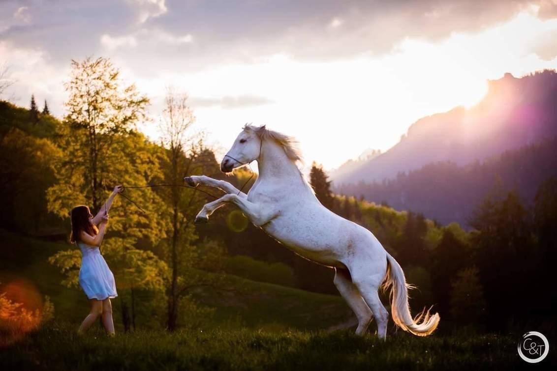Horse Zwitserlands - Paard steigert tussen de mooie bergen van Zwitserland - foto door CreateTrends op 11-07-2020 - deze foto bevat: sunset, paard, zonsondergang, bergen, zwitserland, steigeren