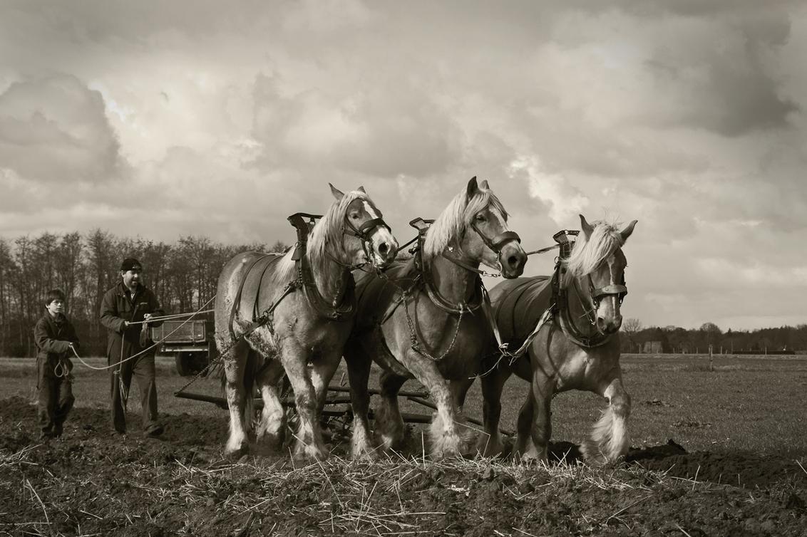 De boerenstiel - De boerenstiel… gaat teloor wordt gezegd. Het is allemaal niet meer zoals vroeger, de 21ste eeuwse boer is een techneut die zijn bedrijf hoort te run - foto door kosmopol op 10-04-2012 - deze foto bevat: boer, ploegen, brabander, kosmopol
