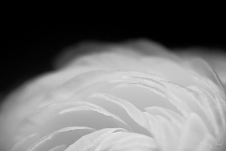 Petals essence - foto 2