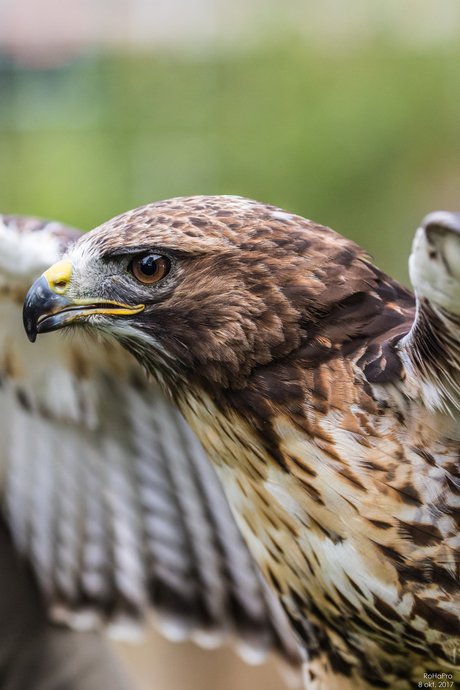 Canon Experience Day - Roofvogels_05