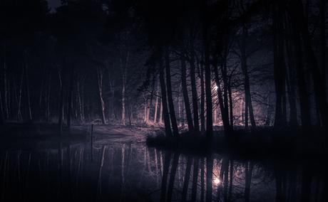 Nacht in het bos