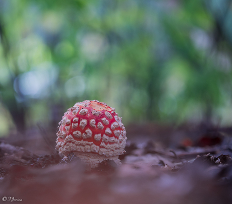 Op een kleine paddenstoel