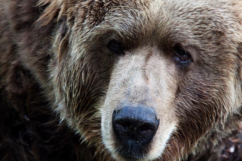 bruine beer - Oog in oog - foto door anne14 op 12-05-2011 - deze foto bevat: bruine_beer