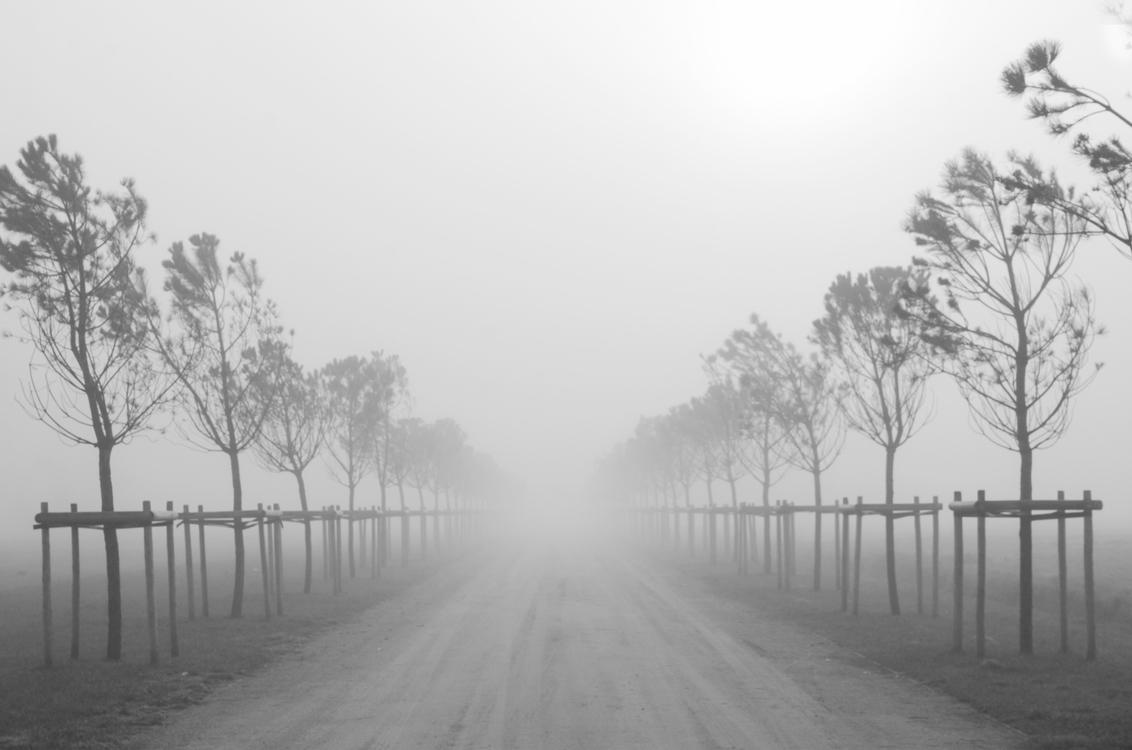 Het oneindige in de mist - - - foto door Canard op 03-01-2018