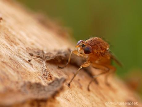 insect op paddestoel