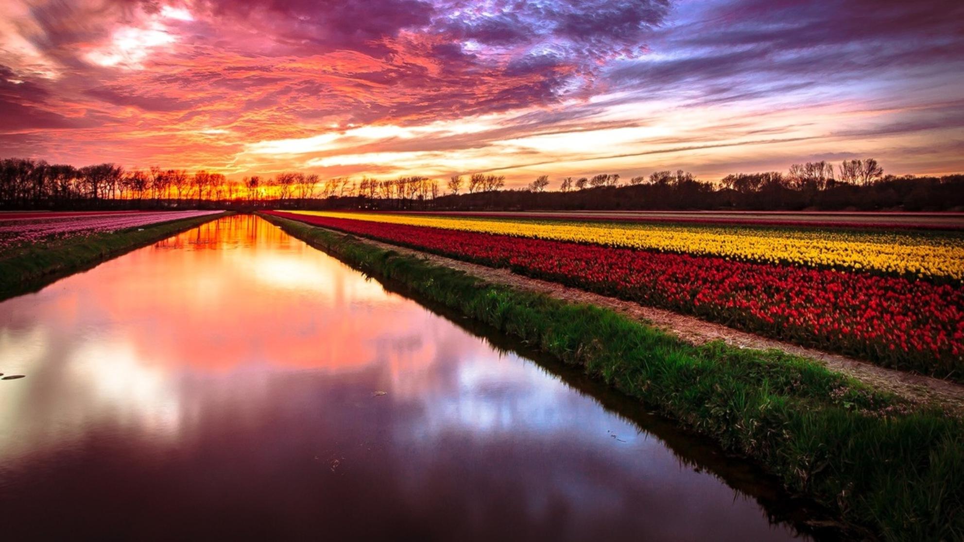Dutch Flowers - Ook maar eens naar de Bollenvelden, het zat goed mee.... - foto door HenkPijnappels op 22-04-2016 - deze foto bevat: lucht, wolken, zon, water, tulpen, lente, natuur, avond, spiegeling, landschap, bomen, lange sluitertijd - Deze foto mag gebruikt worden in een Zoom.nl publicatie