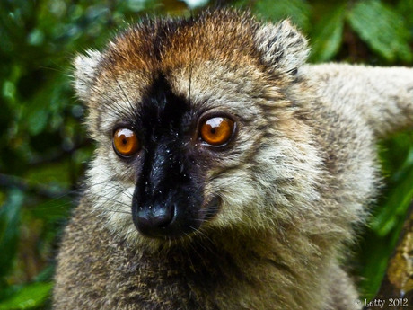 Wildlife... in Madagaskar...