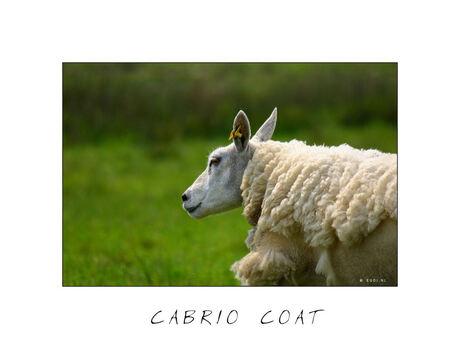 Cabrio Coat