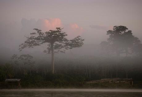 optrekkende mist vanaf de Suriname rivier.