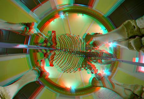 Skelet RAMON NHM Rotterdam 3D fish-eye
