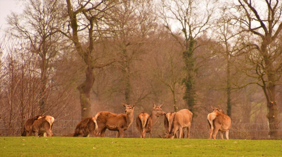 DSC_1621 Alert. - Mooi in de kijker. - foto door edu-1 op 09-03-2021 - deze foto bevat: dieren, landschap, bos, herten
